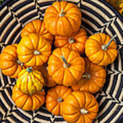 Basket Full Of Small Pumpkins Poster