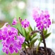 Basket Of Orchids Poster