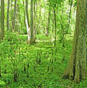 Baton Rouge Blueonnet Swamp  La Poster