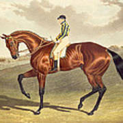 Bay Middleton Winner Of The Derby In 1836 Poster