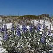 Beach Flora Poster