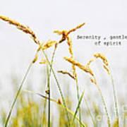 Beach Grass .serenity. Poster
