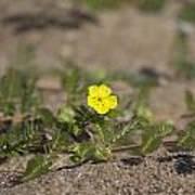 Beach Wildflower Poster