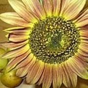 Beaming Sunflower Poster