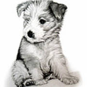 Bearded Collie Pup Poster by Michelle Harrington