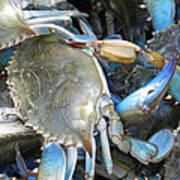 Beaufort Blue Crabs Poster