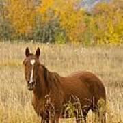Beautiful Chestnut Horse Poster