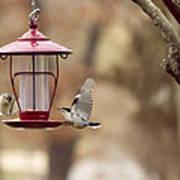Beautiful Birds Poster