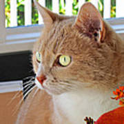 Beautiful Cat With Yellow Eyes Closeup Poster