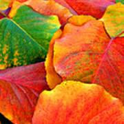 Beautiful Fall Leaves  Poster