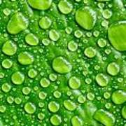 Beautiful Green Leaf With  Water Drops Poster