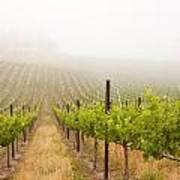 Beautiful Lush Grape Vineyard Poster