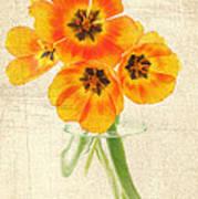Beautiful Tulips Poster