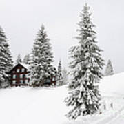 Beautiful Winter Landscape With Trees And House Poster