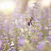 Bee Beeutiful Poster