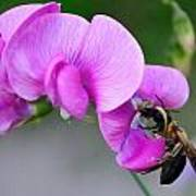 Bee In The Pink - Greeting Card Poster