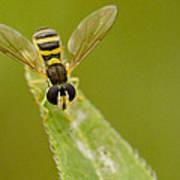 Bee On Belief  Poster by Dean Bennett