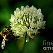 Beeflower2 Poster