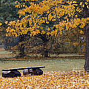 Bench In The Autumn Landscape Poster