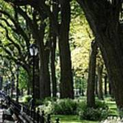 Benches Trees And Lamps Poster