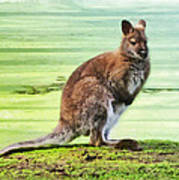 Bennets Wallaby  Poster