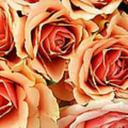 Bergen Roses Poster