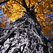 Big Autumn Tree In Fall Park Poster