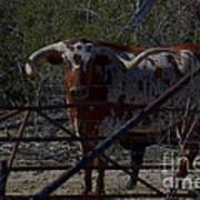 Big Bull Long Horn Poster