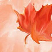 Big Leaf Maple Poster