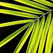 Bight Green Tropical Plant Poster