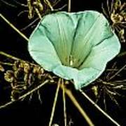 Bindweed And Seed Heads Poster
