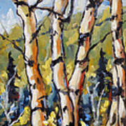 Birches Aglow By Prankearts Poster