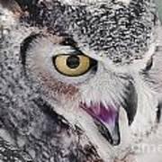 Bird 4 Poster