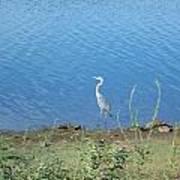 Bird At Lake Varner Poster