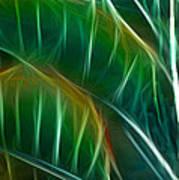 Bird Of Paradise Fractal Panel 3 Poster