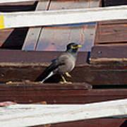 Bird On Boat Poster
