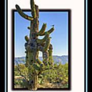 Bird On Cactus Poster