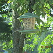 Bird On Full Feeder Poster