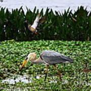 Birding Action At Circle B Bar Reserve Poster
