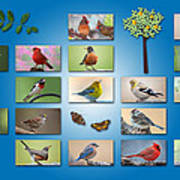 Birds Of The Neighborhood Poster