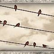Birds On Wires Poster