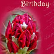 Birthday Card - Red Azalea Buds Poster