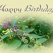 Birthday Greeting Card - American Beautyberry Shrub Poster