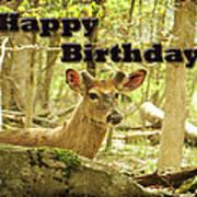 Birthday Greeting Card - Whitetail Deer Buck In Velvet Poster
