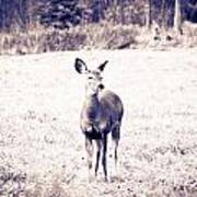 Black And White Deer Poster