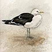 Black Backed Gull  Poster