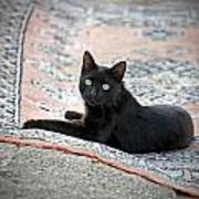 Black Cat On A Persian Rug Poster