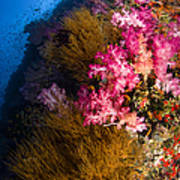 Black Coral And Soft Coral Seascape Poster