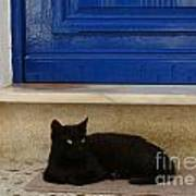 Black Greek Cat Poster