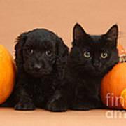 Black Kitten & Puppy With Pumpkins Poster